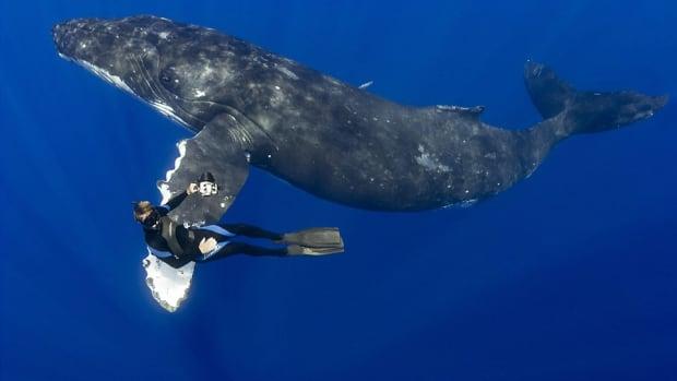 whale0512