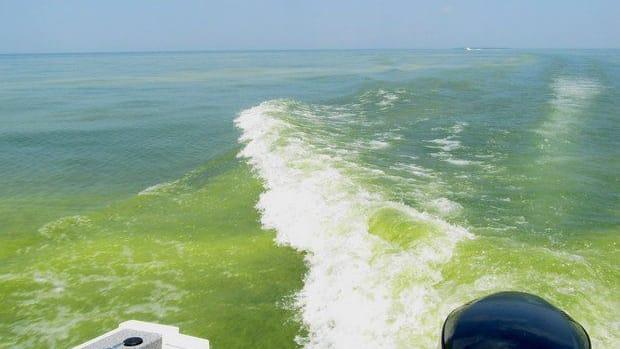 algae0804