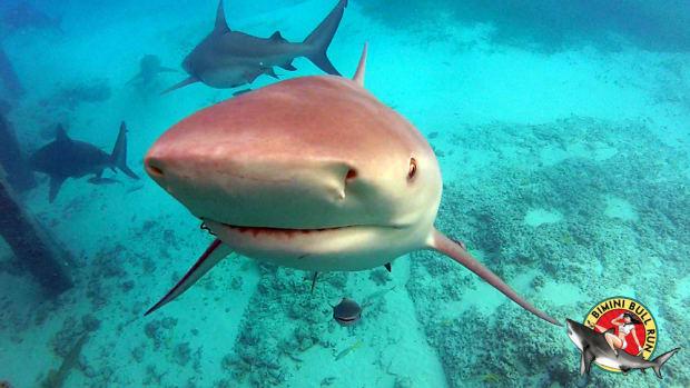 sharkwedding1202