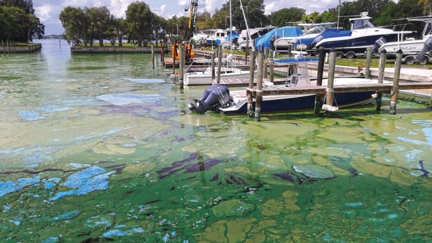Last year, marine companies said business had come to a screeching halt when this thick green slime coated waterways. Now recreational boating and fishing groups are urging congress to increase Everglades restoration funding to address the algal blooms.
