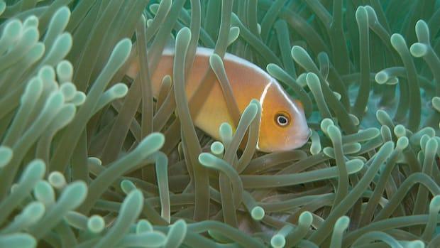 coral-reef-flickr-NOAA