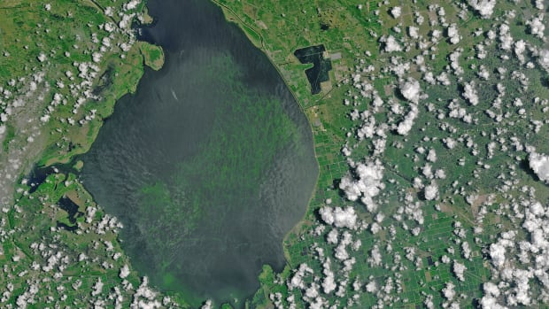 algae-bloom-Lake-Okeechobee-070216_2big_landsat8_nasa