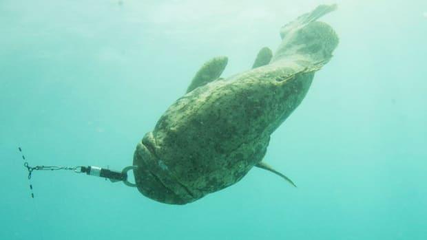 Reef fish from CSP website