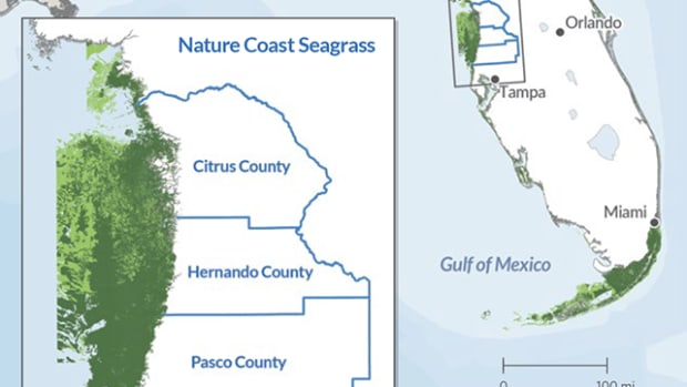 pSeagrass-map