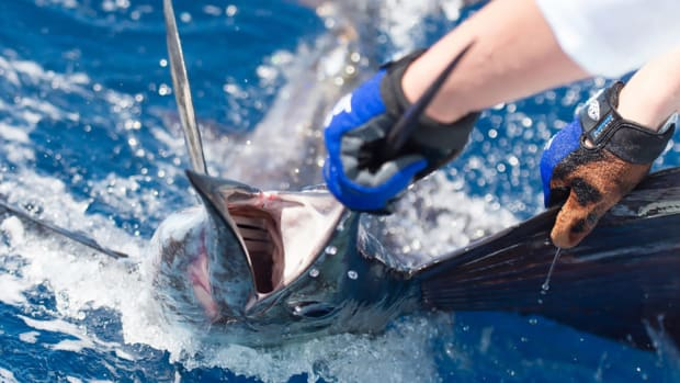 1_CSP-Modern Fish Act