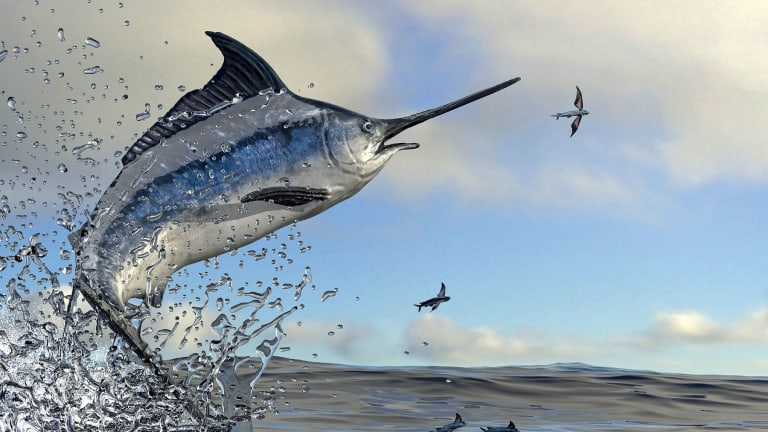 Fish-Management Challenges Evolve