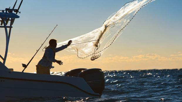 New proposals that fight for conservation and the rebuilding of fish stocks have been drawn up.