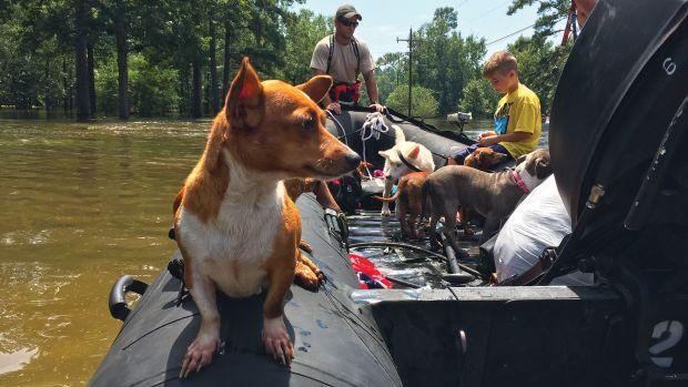 dog-in-boat-harvey