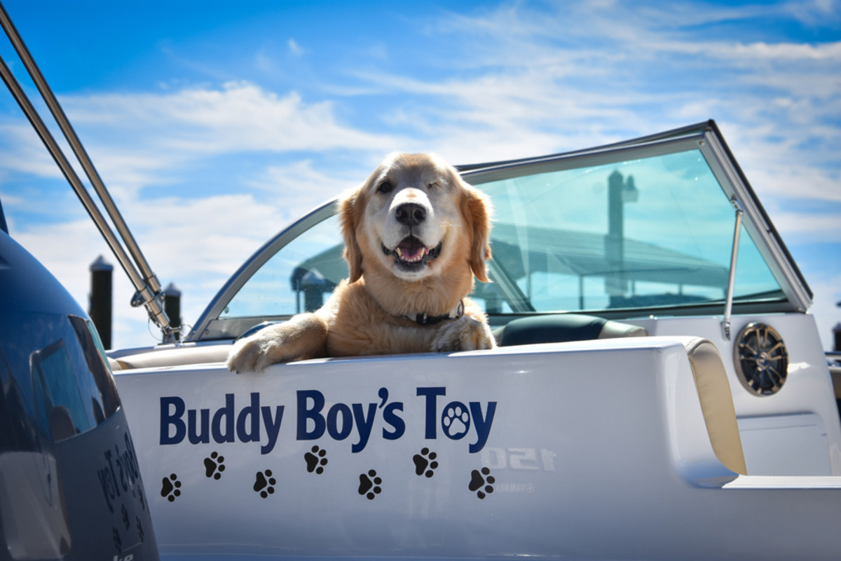 Freedom Boat Club named a boat named Buddy Boy, who was injured in the 2010 BP oil spill.
