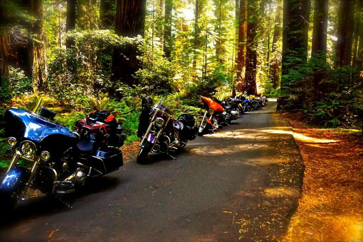 The tour riders' bikes were a beautiful sight spread out under the giant redwoods.