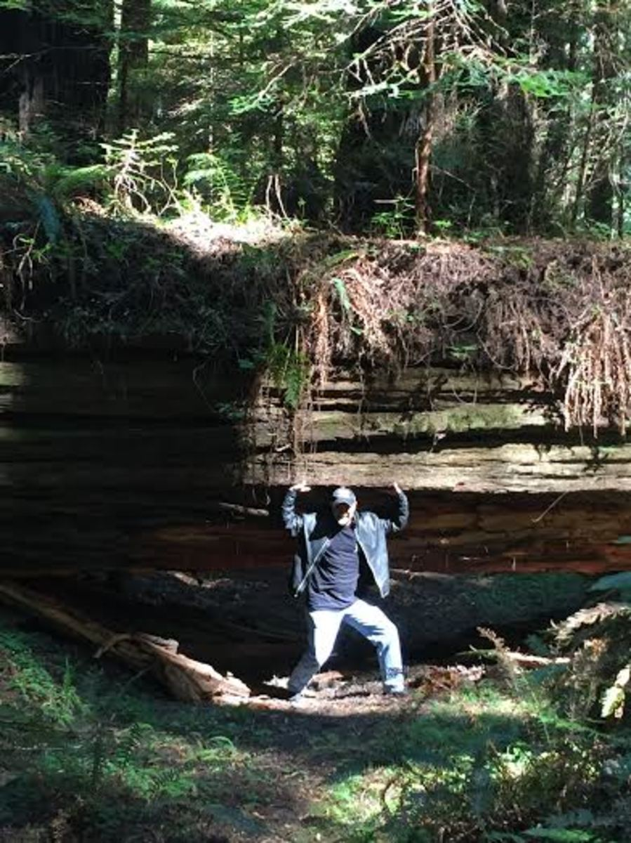 Rider Duffy Stenger, shown at Humboldt Redwoods State Park, is on his second Hull of a Tour.