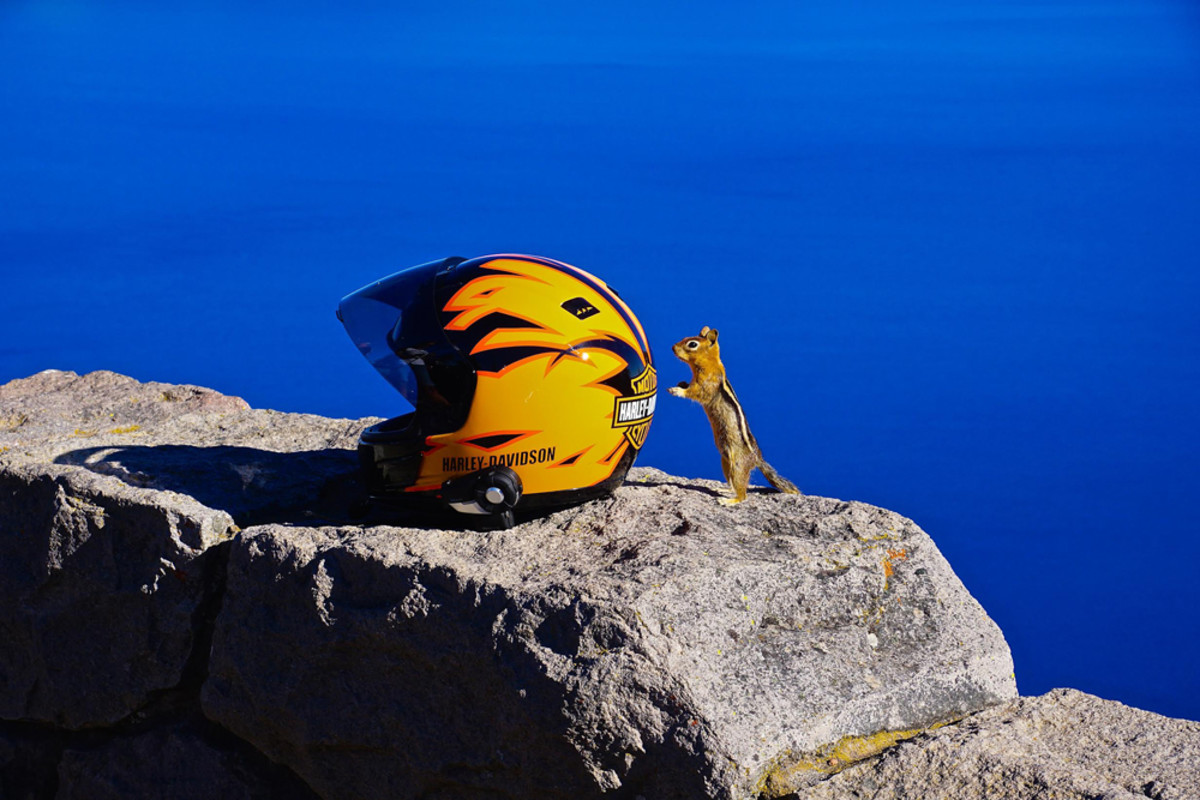 Even the chipmunks warmly welcomed the boaters and bikers to Crater Lake. Photo by Jim Krueger.