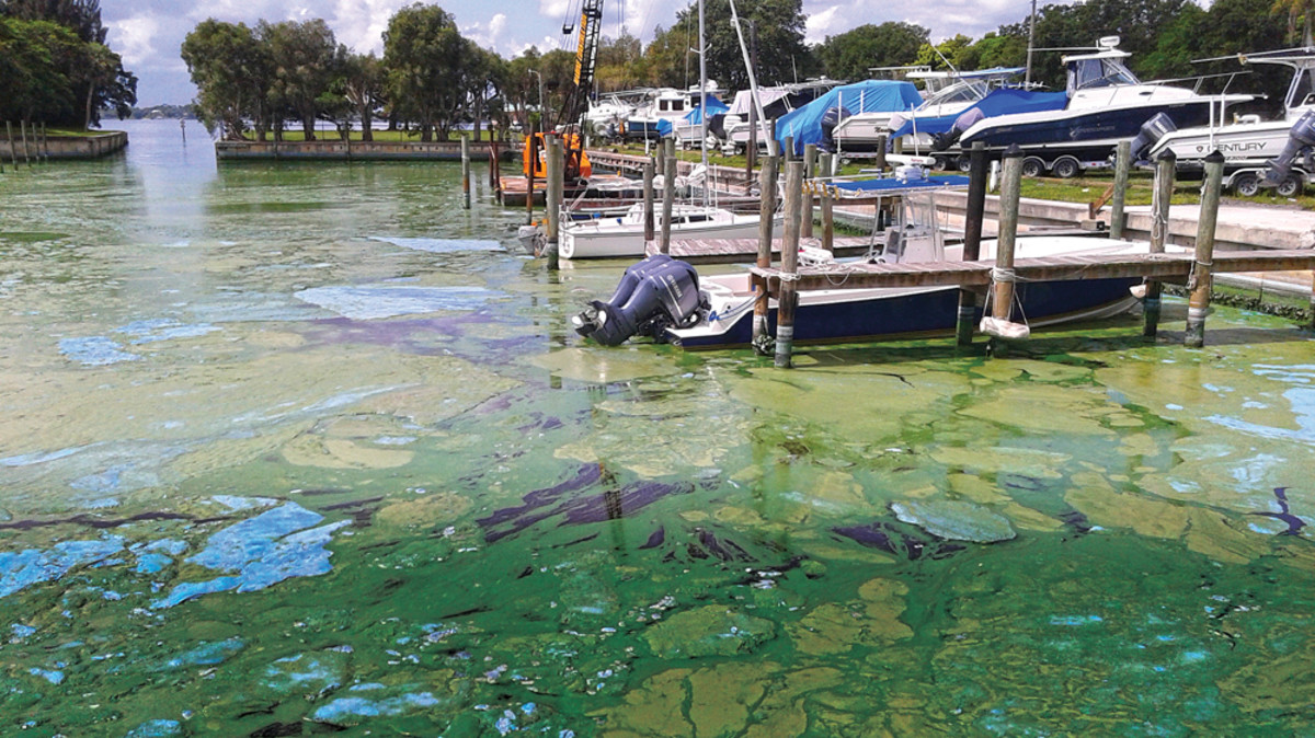 Thick mats of reeking algae clogged the water at Outboards Only in Jensen Beach, Fla., bringing business to a near standstill at peak season.