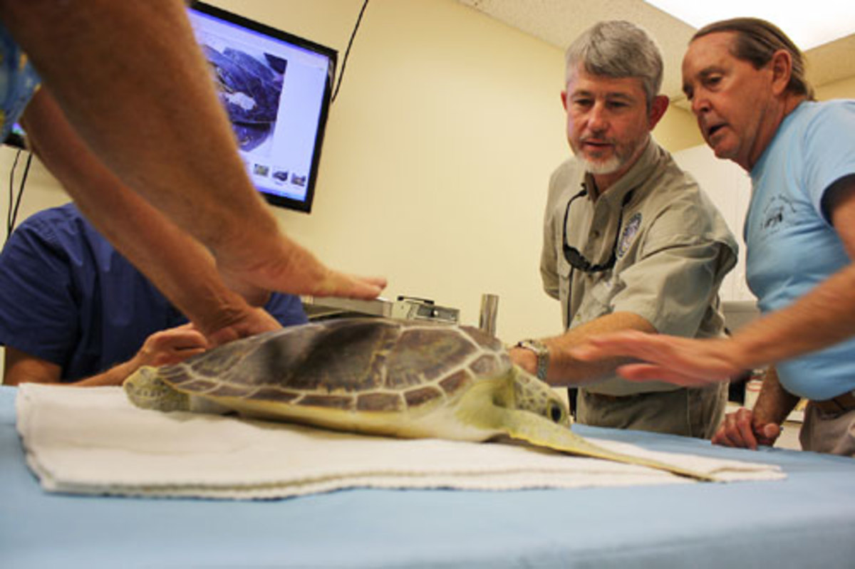 Nick Wiley at Turtle hospital photo