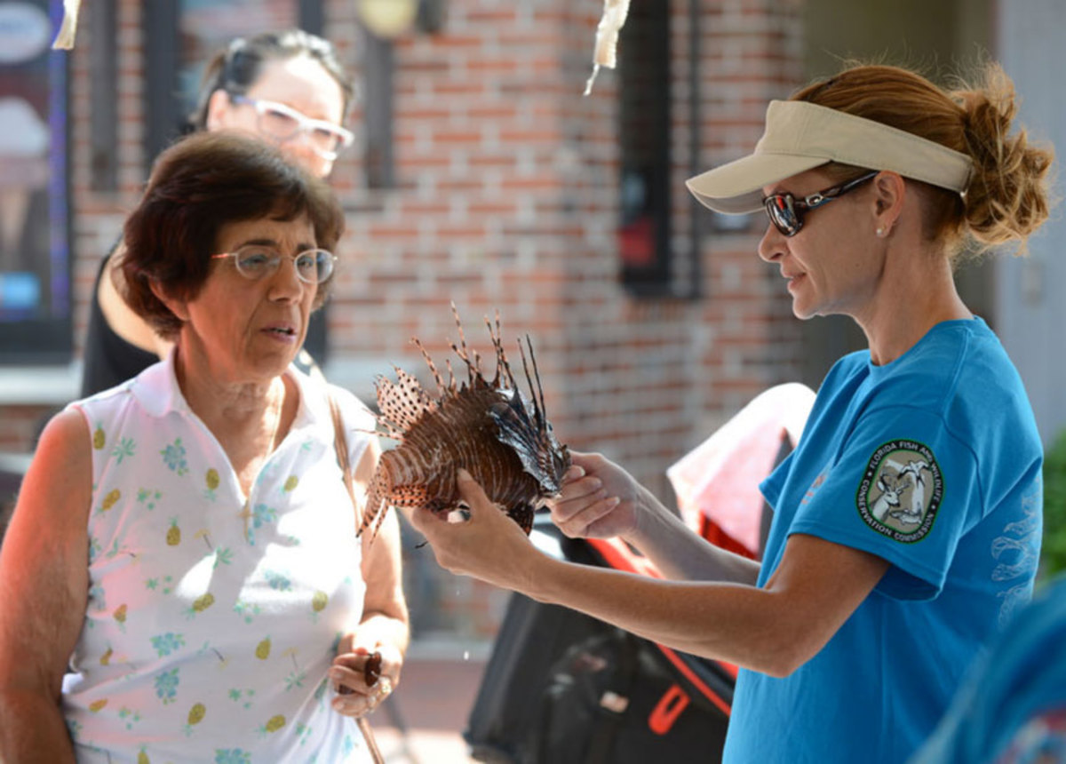 The lionfish is not native to U.S. waters and its venomous spines can negatively impact native species.