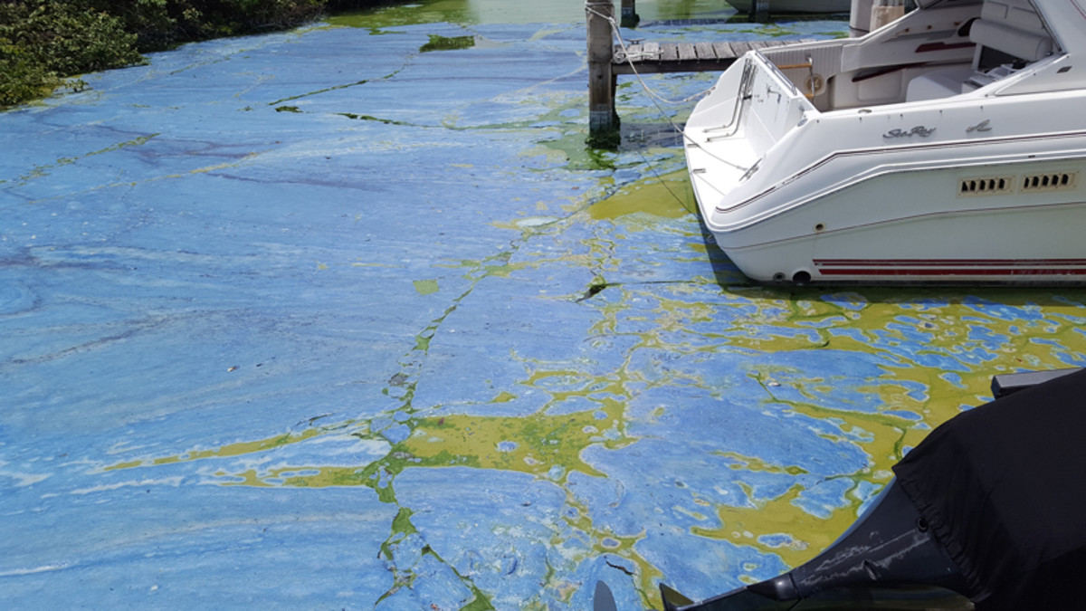 The St. Lucie River in Stuart, Fla., shown here in July 2016, is undergoing it's fourth toxic algae bloom since 2005 and third since 2013.