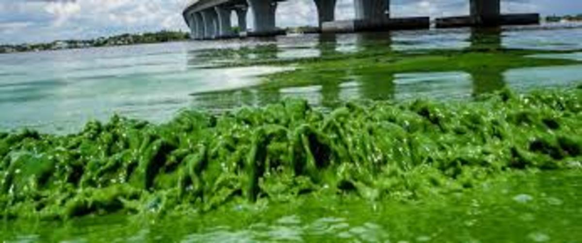 Algaebloom