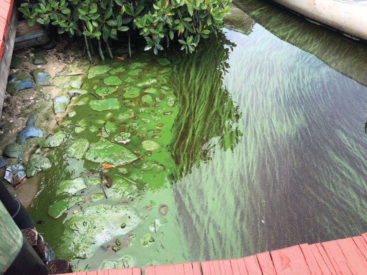 Green algae took over Prosperity Pointe Marina in Fort Myers for nearly two months.