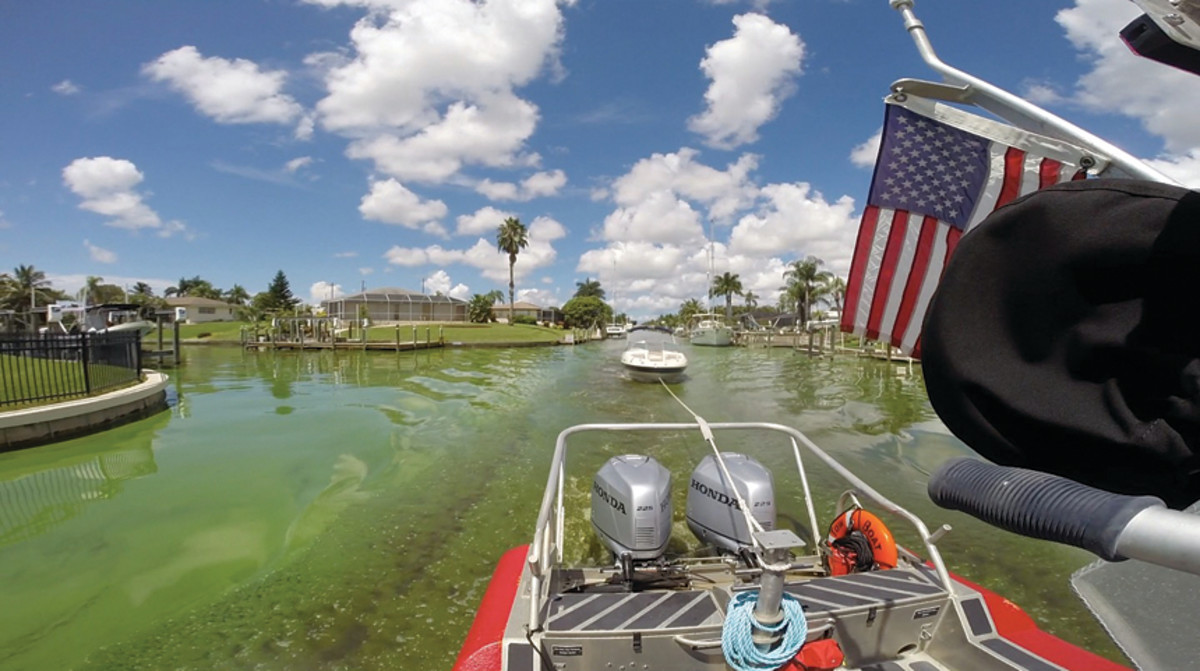 Canals in Cape Coral with little water flow were most impacted by the green algae bloom.