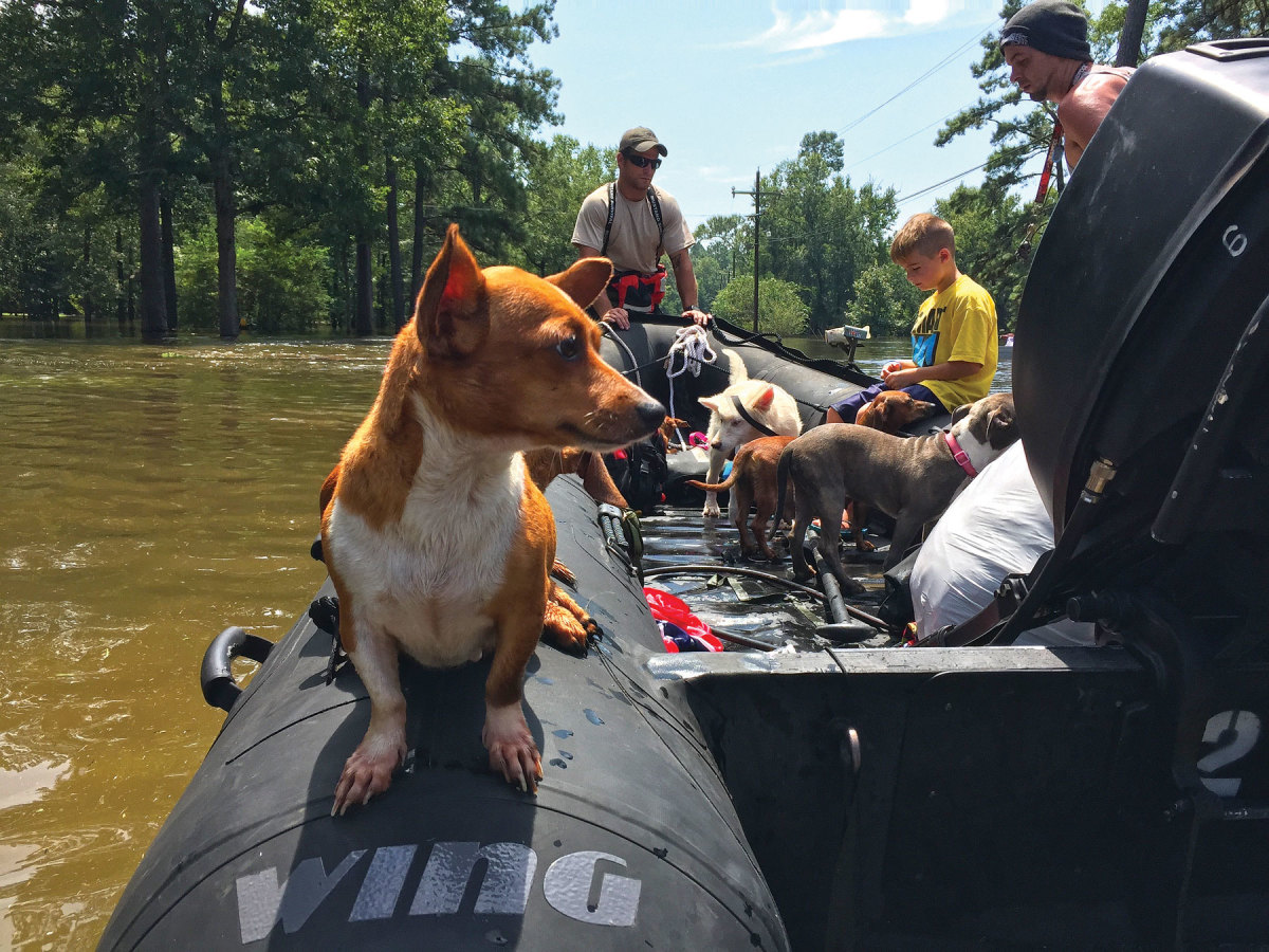 Some families refused to leave their pets behind, so they were ferried out, too.