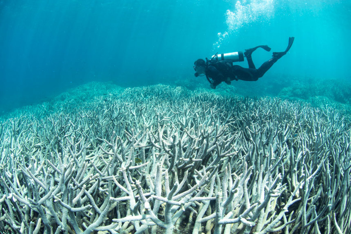 Coral reefs play a vital role in the health of our oceans.