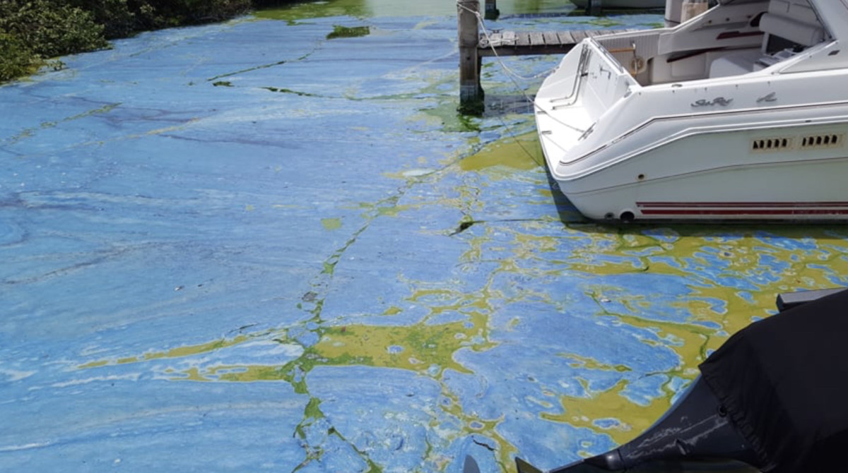 The St. Lucie River in Stuart, Fla., shown here in July 2016, is undergoing it's fourth toxic algae bloom since 2005 and third since 2013. Photo by Ed Killer.