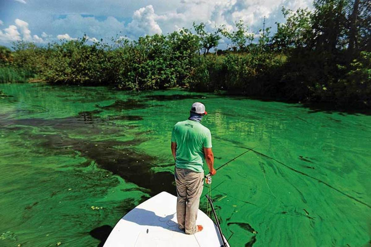 Green algal blooms and red tide hurt Florida's sportfishing and boating industries last year. The water is clear this year, but the state is looking for long-term solutions.