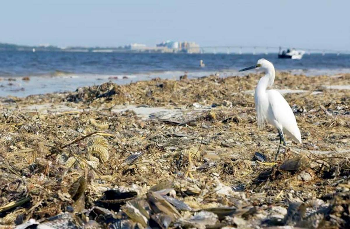 Last year's fish kills and deserted beaches from red tide have not returned to Florida, but Alabama has closed its beaches because of blue-green algae.