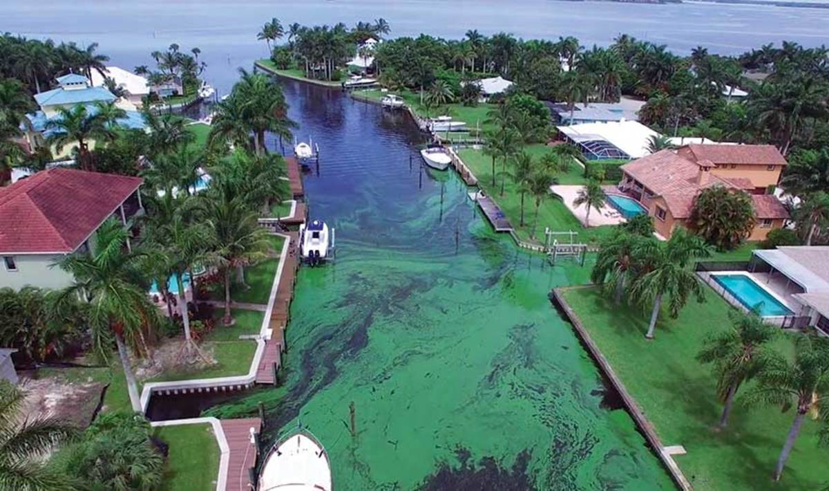 Florida Gov. Ron DeSantis wants to return Florida's Everglades to pristine condition, while eliminating green algal blooms from inland lakes and canals.