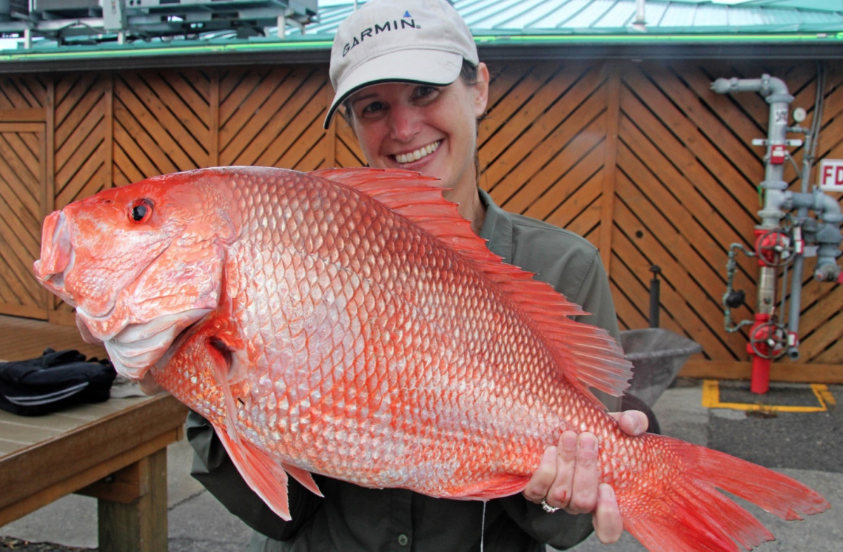Red snapper are a popular game fish for anglers in the Southeast. photo courtesy of Fish and Wildlife Research Institute.