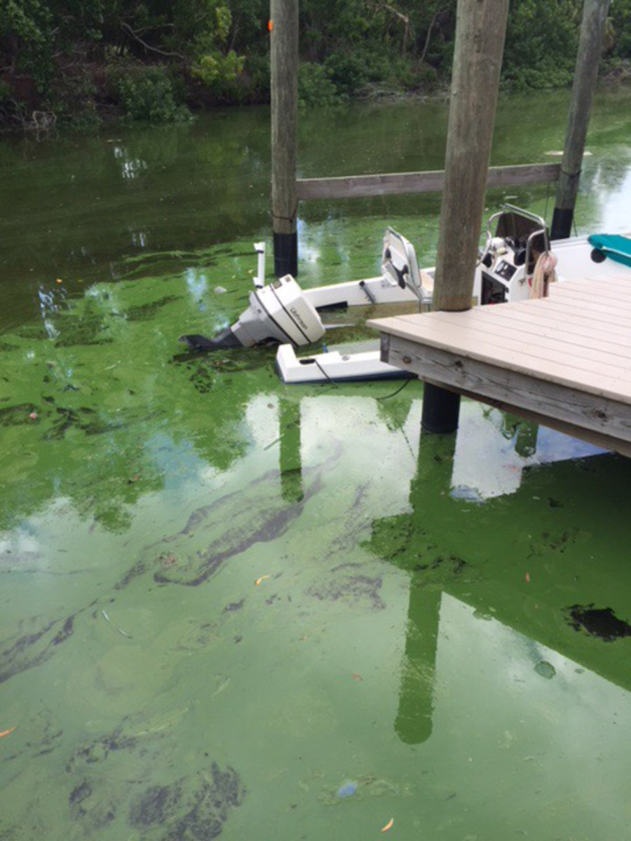 Green algae in Gulf of Mexico canals. Courtesy: Boat/US