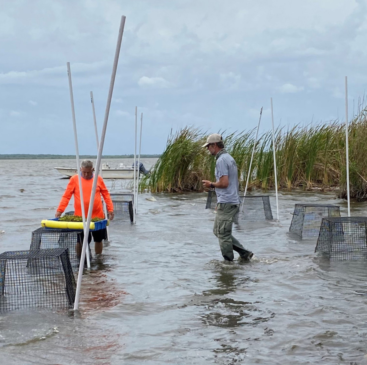 AquaTech Eco Consultants has completed more than 150 seagrass restoration projects.
