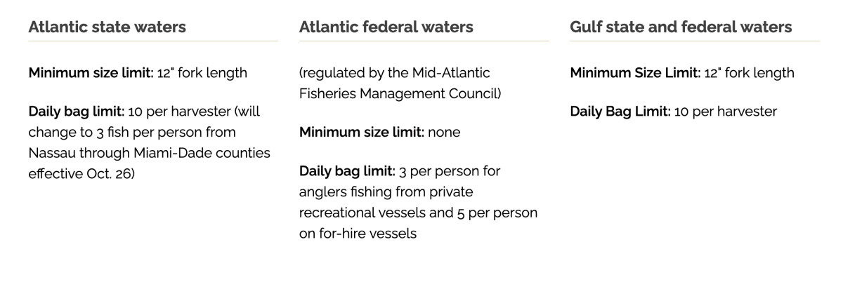 Updated regulations for bluefish.