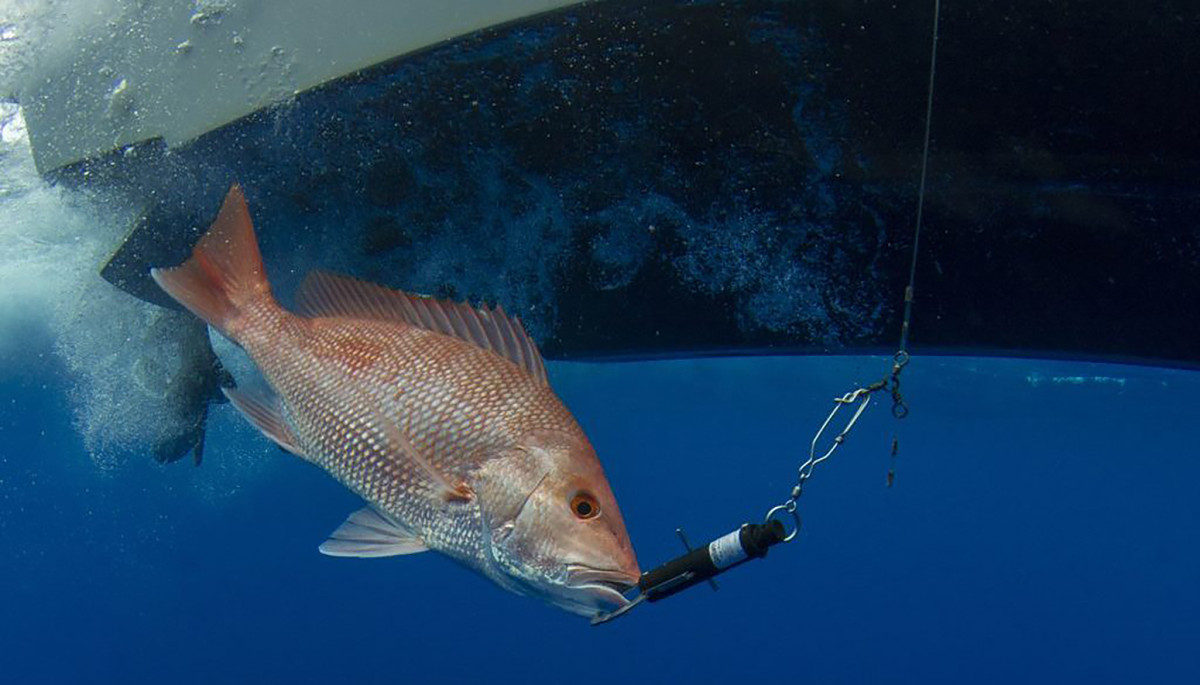 CENTER FOR SPORTFISHING POLICY