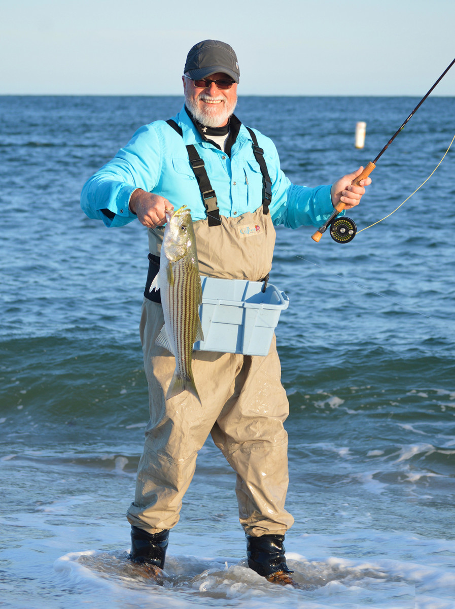 This striper was released into Vineyard Sound.
