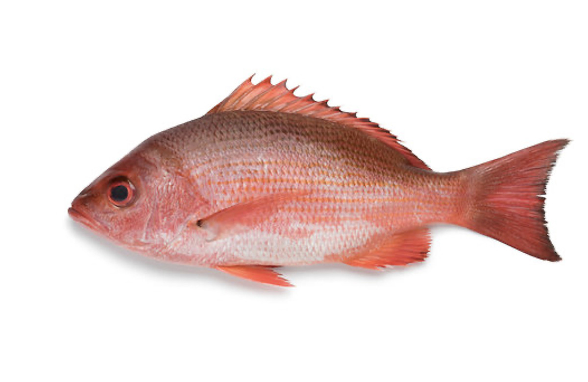 3_Red snapper