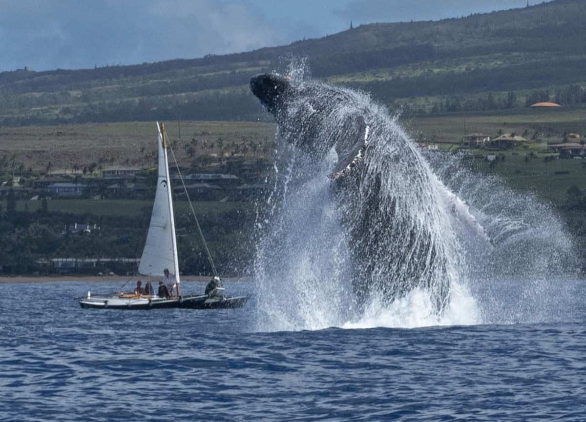 Don McLeish took this photo as he motored away from the whales. Photo: Don McLeish