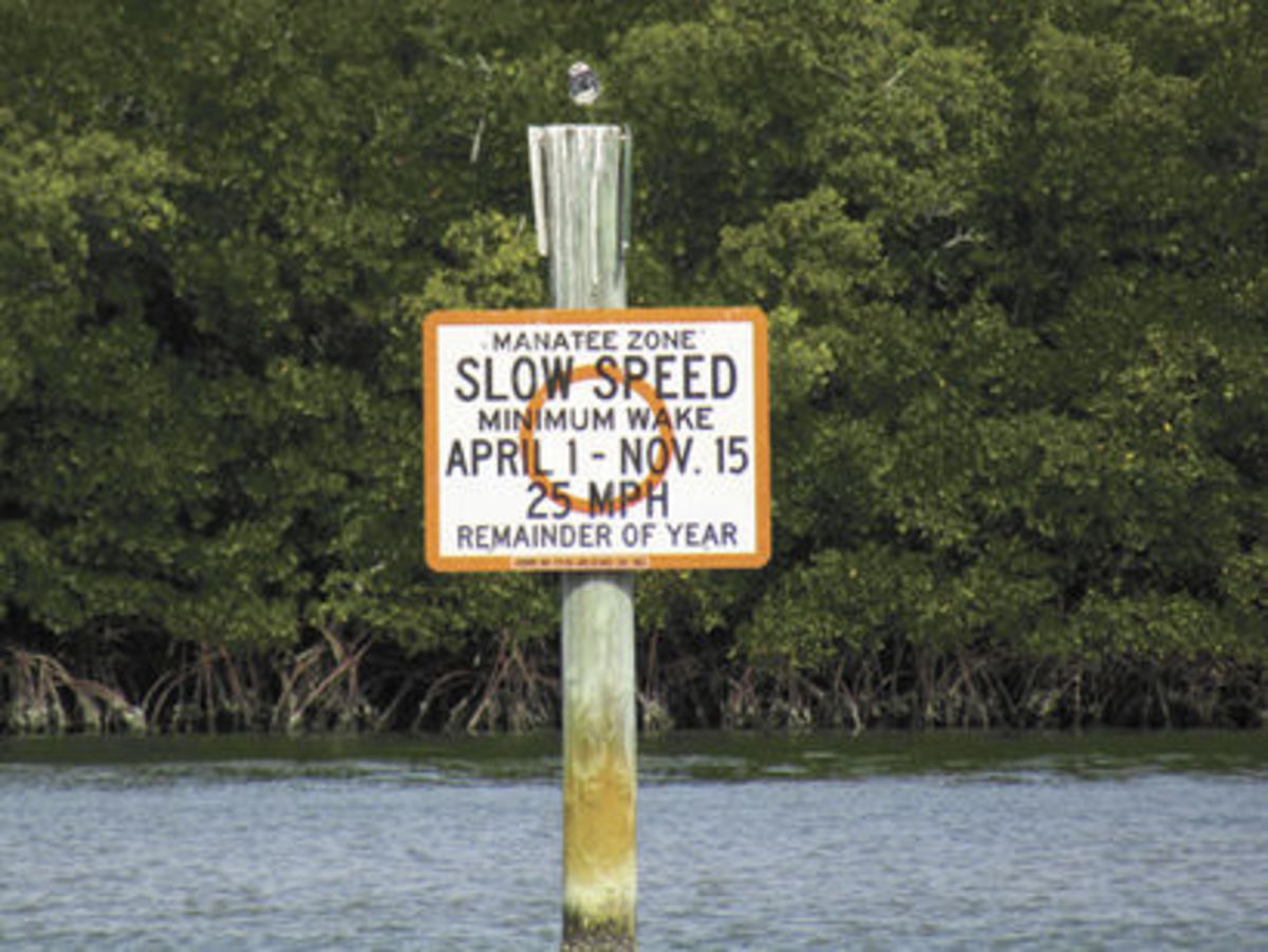Many Florida waterways have no-wake zones for manatees.