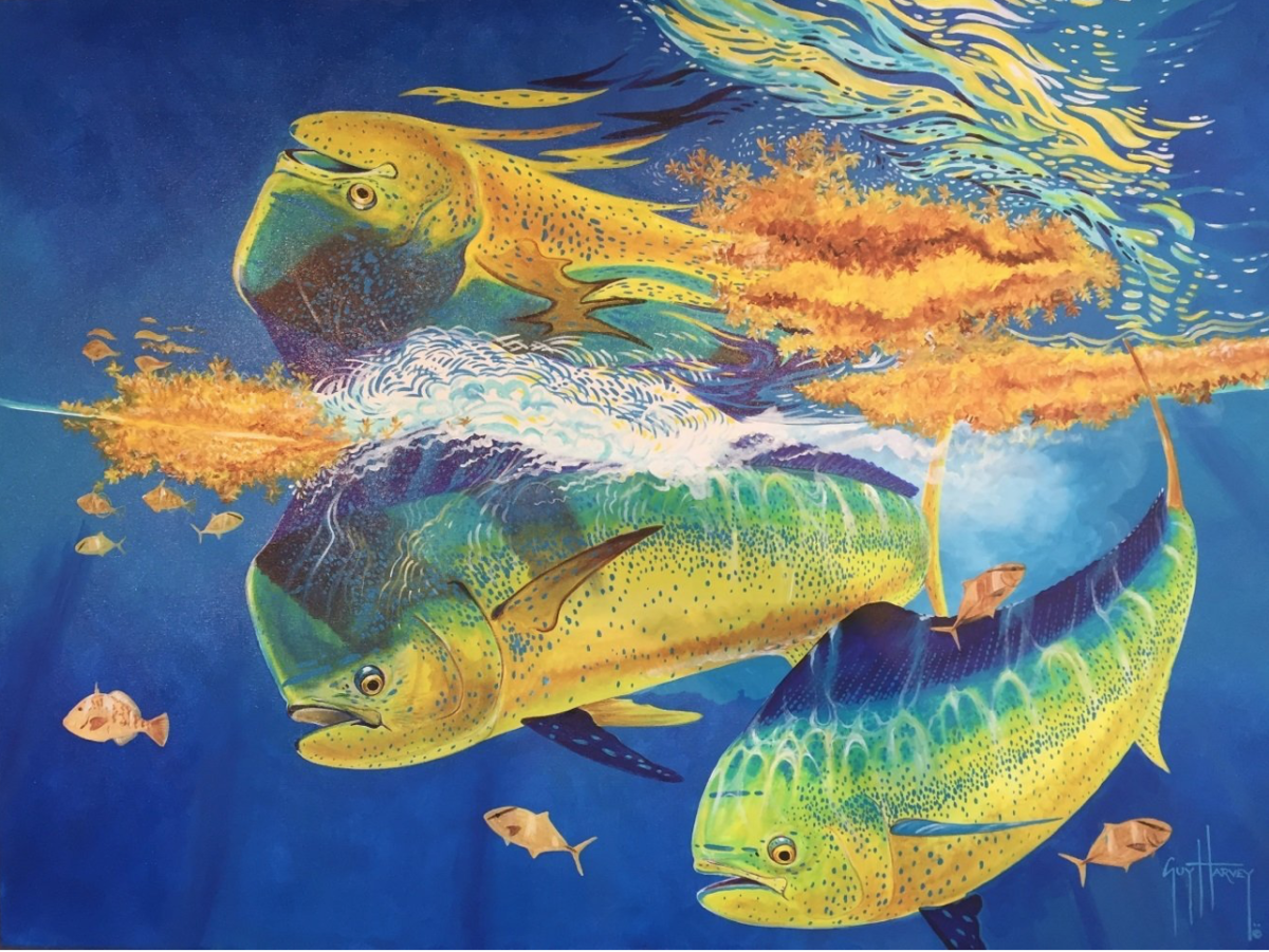 This mahi painting is one of many in the Guy Harvey collection.