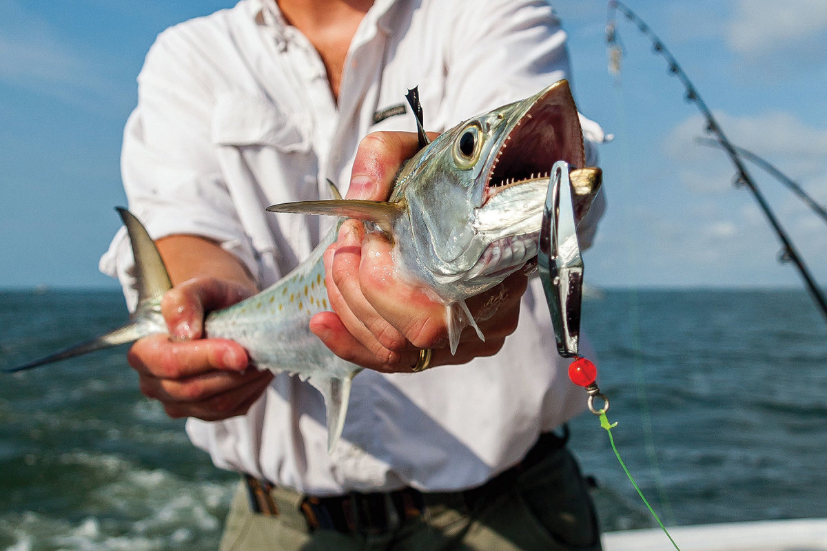 The South Atlantic council sets Spanish mackerel management from the Florida Keys to New York. However, the migratory species is increasingly found off New England.