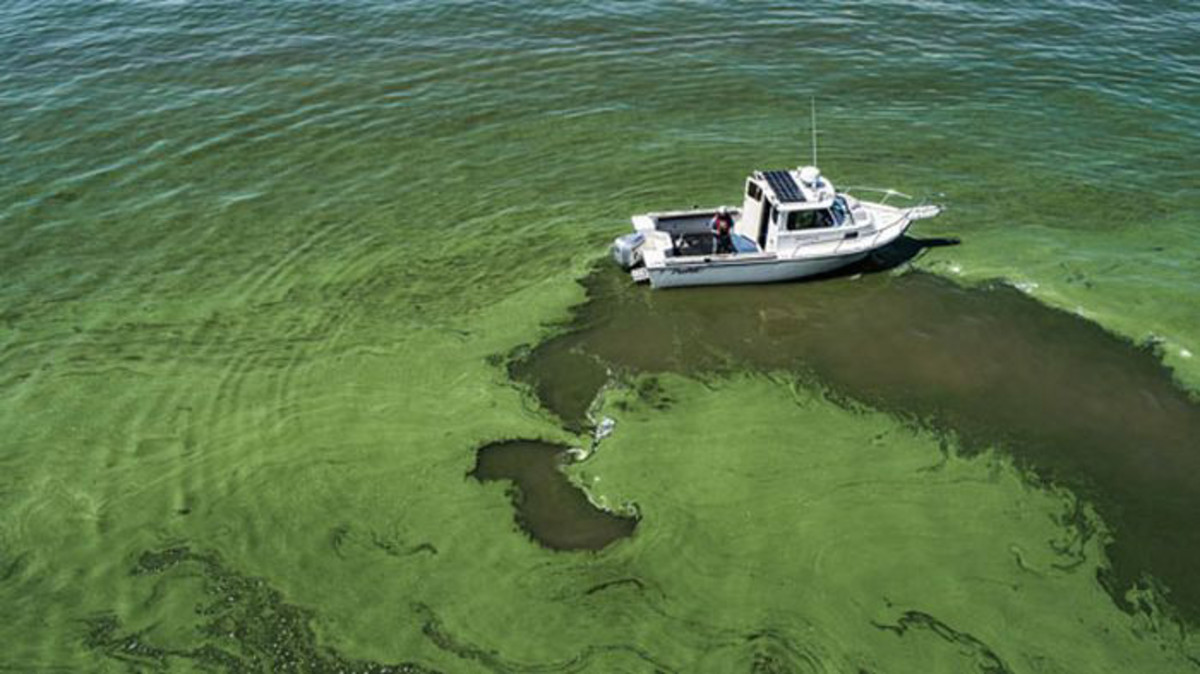Lake Erie's algae blooms have been a problem for years.