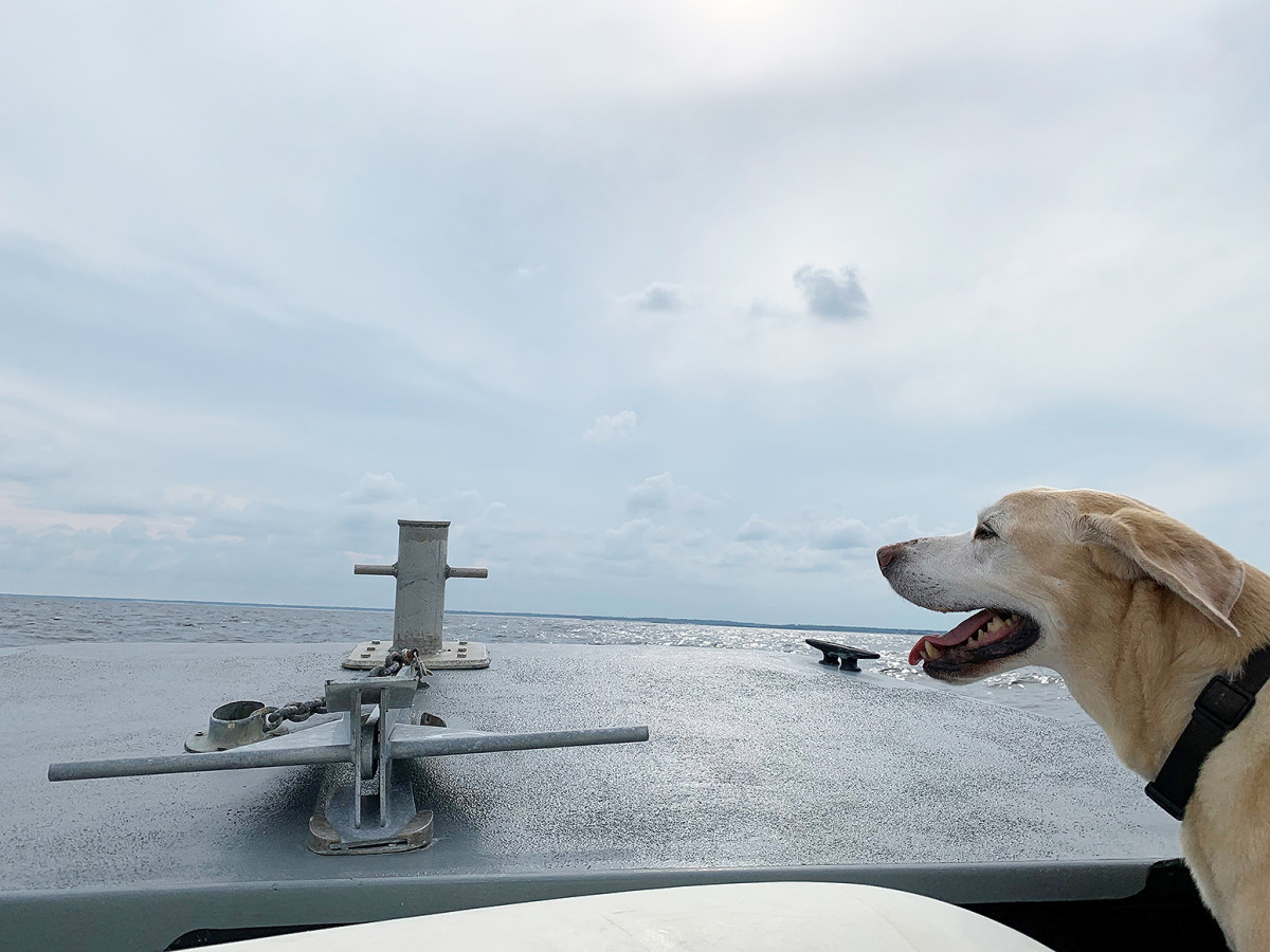 3_Sea Tow_Tuna lookout